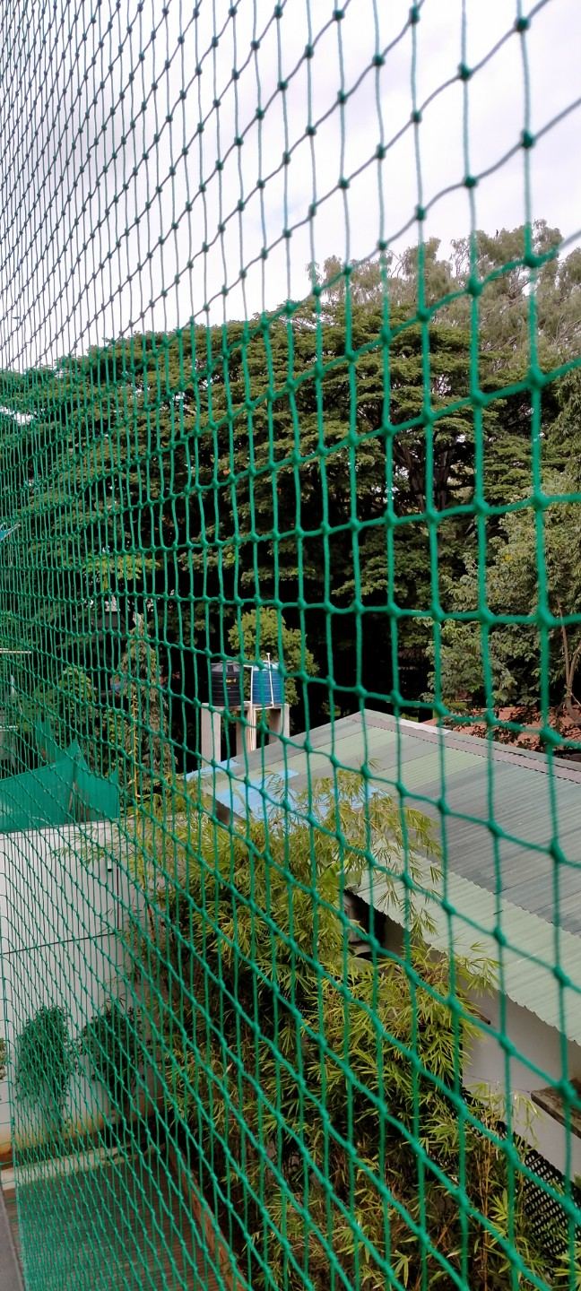 Pigeon Safety Nets